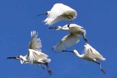 birds 2c i